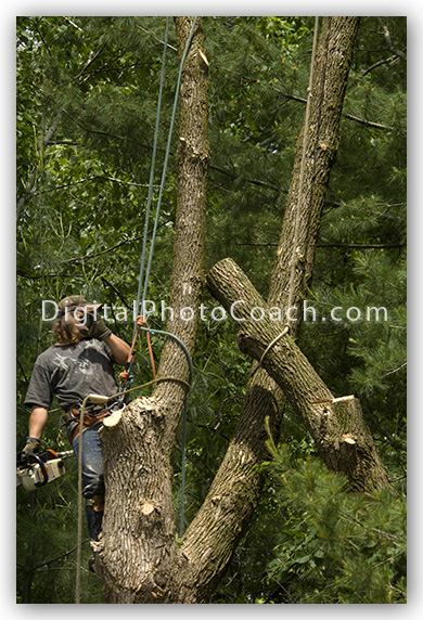 man in a tree with a chain saw