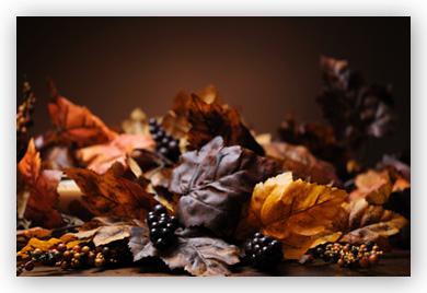 autumn color still life still