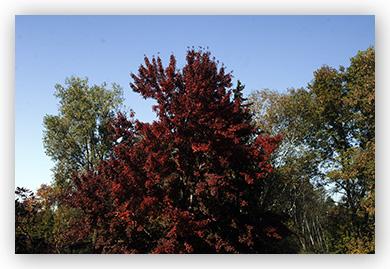 fall fall foliage